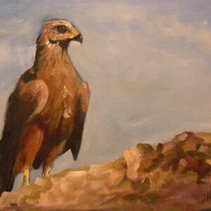 águila. Oleo sobre tela. (30x40 cm)