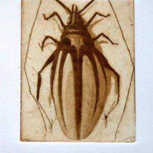 Escarabajo (Aguafuerte/aguatinta)