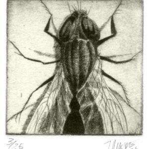 mosca (Aguatfuerte)
